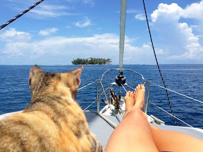 Amelia, el gato que da la vuelta al mundo en velero con su dueña