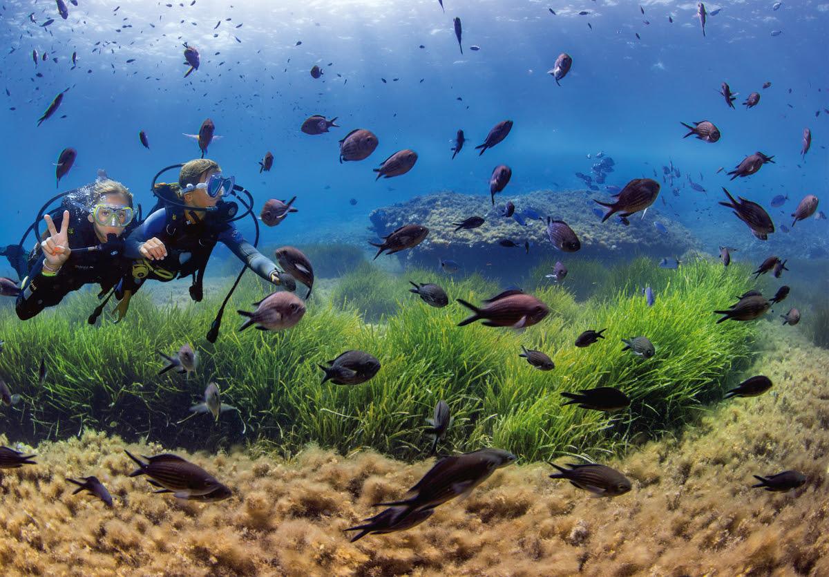El Club Nàutic de s'Arenal, sede del primer campus marino Mallorca Dive Camp